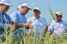 Урожай в Татарстане будет меньше