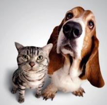 Собаки кусают челнинцев меньше