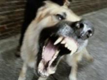 Собачьи дрязги