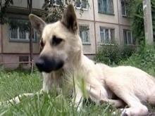 Одинокая собака желает познакомиться