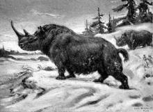 В Челнах водились носороги