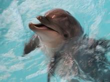 Шоу в дельфинарии Набережных Челнов, посвященное дню рождения Ирбиса