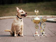 Челнинцев приглашают на выставку беспородных собак