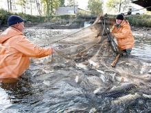 На реке Ик промысловикам разрешили ставить сети…