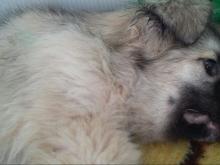 У приюта для бездомных животных вылили жидкость, которая убила щенка
