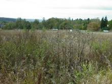 У компании «Восток Зернопродукт» 325 гектаров земли заросли сорняками - на ней никто не работал