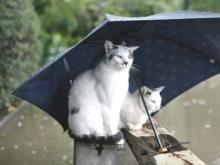 Нас ожидает холодный май и дождливое лето?