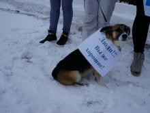 На пикет в защиту прав животных пришла бездомная собака. Ее забрали с собой волонтеры