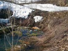В Набережных Челнах из-под снега стали вытаивать трупы животных, погибших зимой