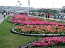 На содержание зеленых насаждений и фонтанов из бюджета города выделено более 48 млн рублей