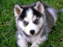 Илхам Шакиров: Прежде чем купить собаку, человек должен обучиться ее воспитанию