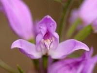 Заповедник орхидей