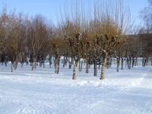 Тысяча деревьев или торговый центр?