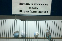 - Попугаи-людоеды (Камиль Фасахов)
