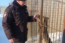 «Боевики из Чечни предлагали за наших собак большие деньги»